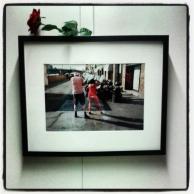 Instagram_cornutus_20121114 (4)