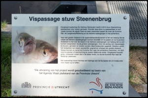 Vispassage_Steenenbrug2